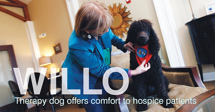 Willo - Therapy dog comfort to hospice patients